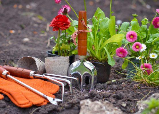 Comment préparer son jardin avec l'arrivée du printemps ?